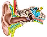 Заболевания уха